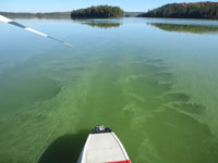 Dickson Lake Algae Bloom - September 2014