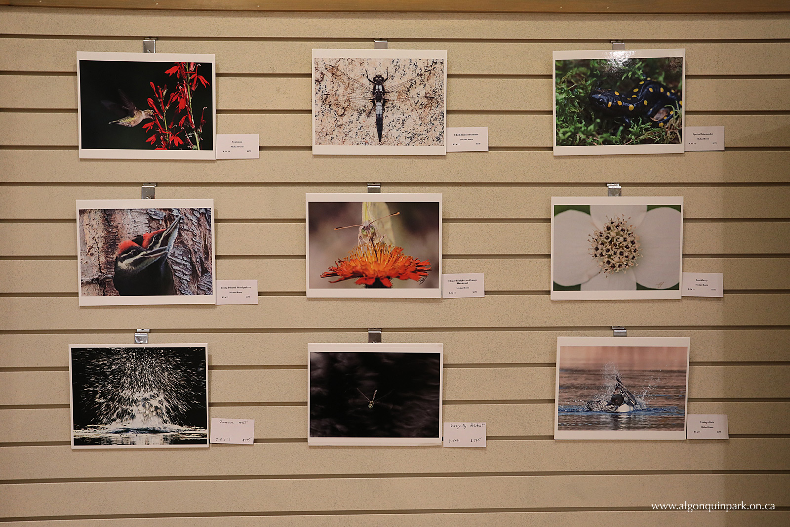 Algonquin Wild Art Show at the Algonquin Park Visitor Centre by Michael Runtz