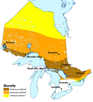 Ontario Bear Distribution