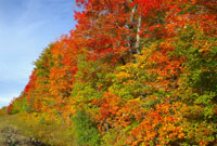 Fall (Autumn) in Algonquin Park