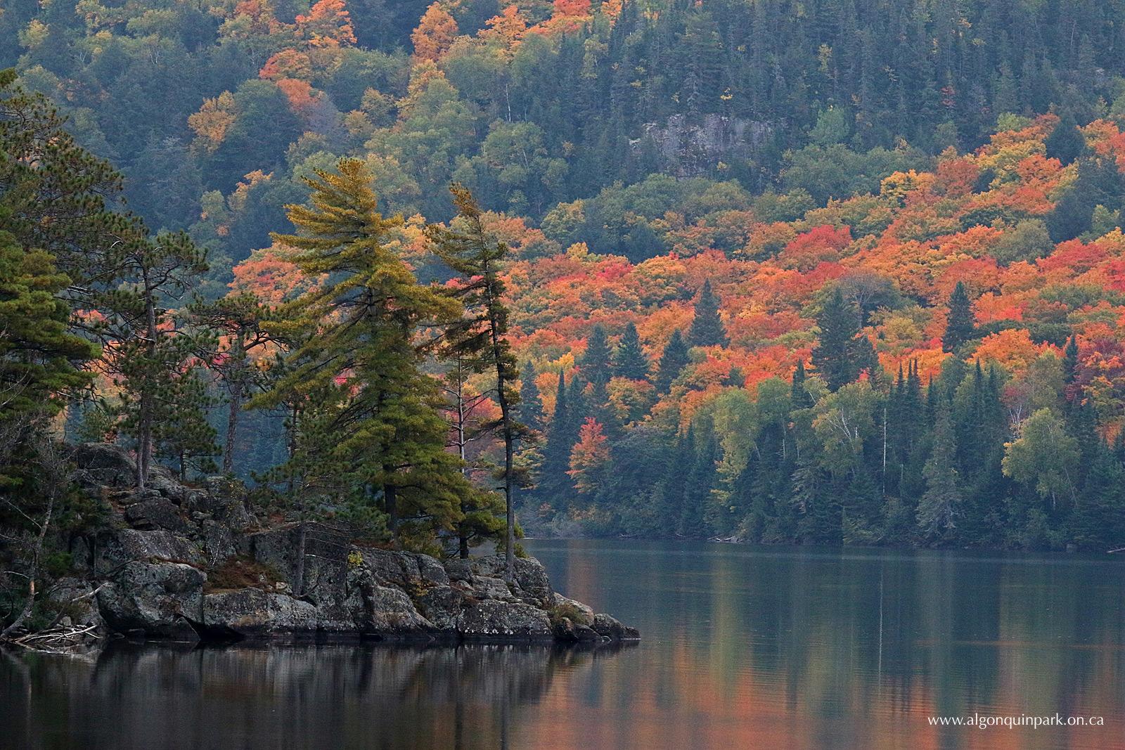 Fall Colour Report   Algonquin Provincial Park   The ...