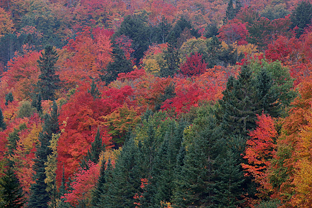 Algonquin Park's fall colour near Smoke Lake on October 6, 2016 at km 16