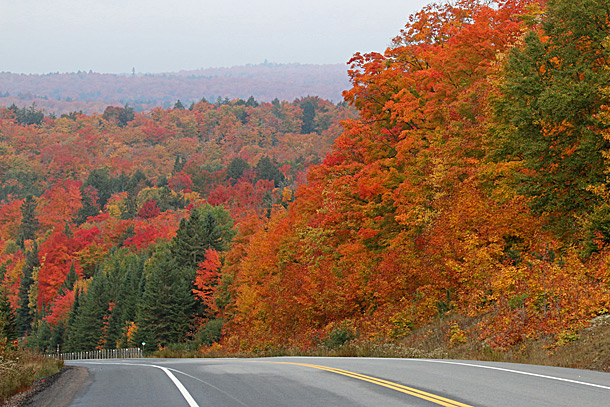 Algonquin Park's fall colour on October 6, 2016 at km 16