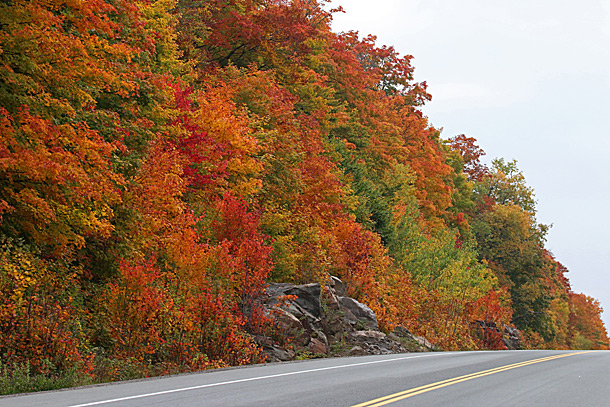 Algonquin Highway 60 near km 17 in Algonquin Park on October 6, 2016