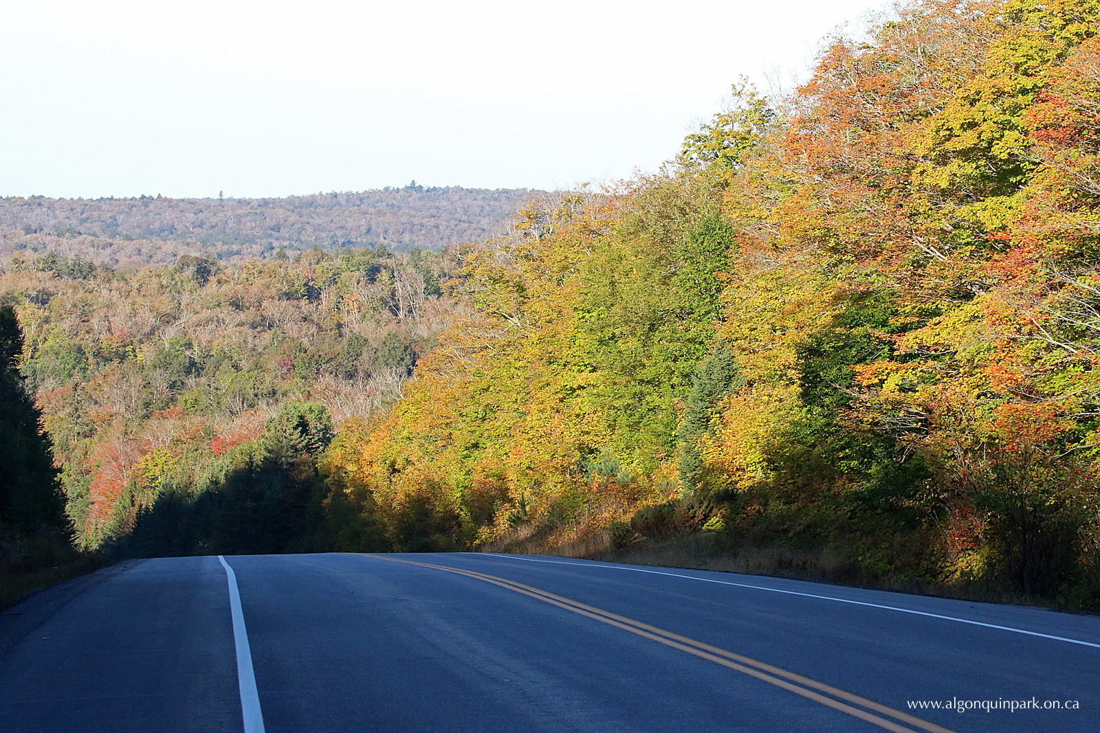 fall colour report algonquin provincial park the friends of