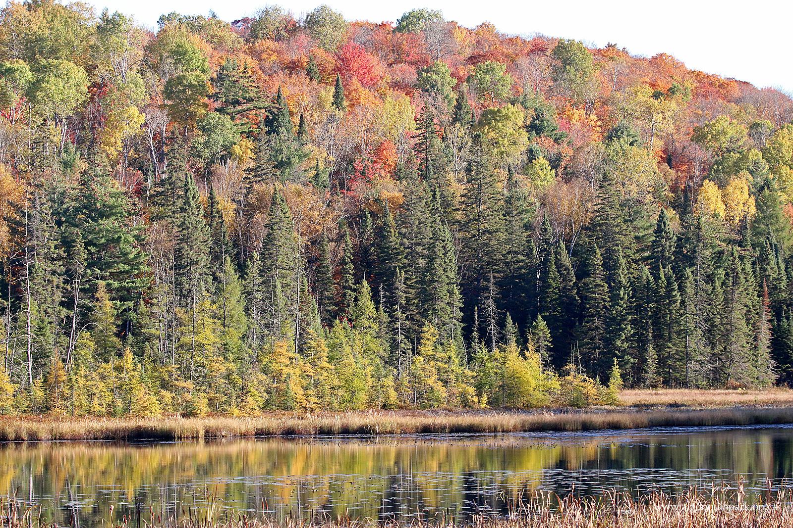 fall colour report algonquin provincial park the friends of