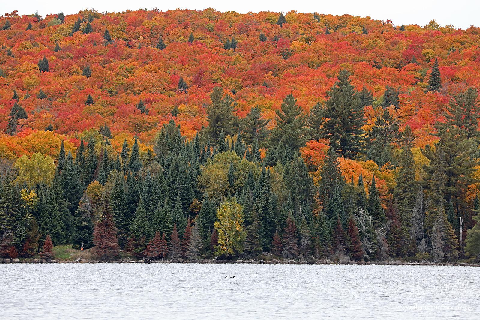 Fall Colour Report | Algonquin Provincial Park | The ...