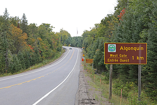 Near the West Gate in Algonquin Park on September 8, 2020