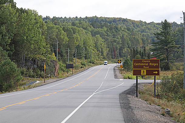 Poplar dominated area at km 38 of Highway 60 in Algonquin Park on September 14, 2020