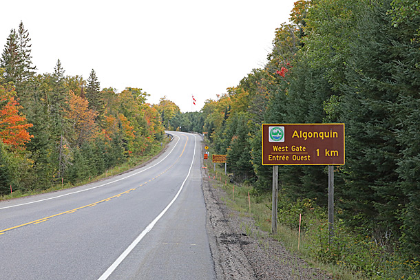 At the West Gate of Algonquin Park on September 16, 2020 (click to enlarge).