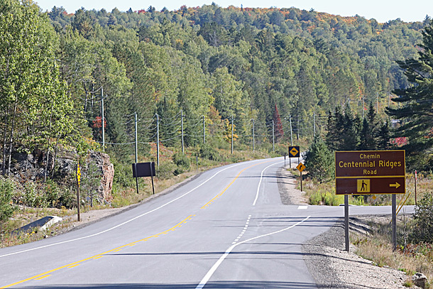 Aspen (poplar) dominated area near Centennial Ridges Road and Highway 60 in Algonquin Park on September 21, 2020. Aspen fall colour change occurs after maples.