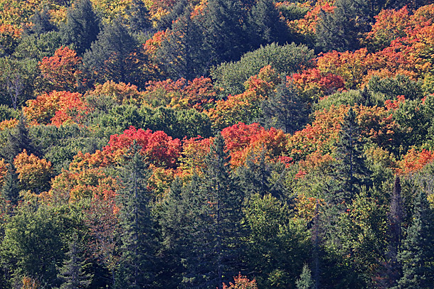 Fall colour along Highway 60 in Algonquin Park on September 21, 2020