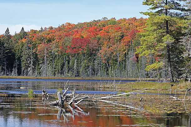 Fall colour in Algonquin Park on September 21, 2020