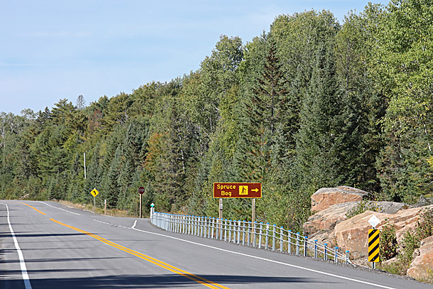 Later changing Aspen (poplar) and conifer dominated area along Highway 60 at Spruce Bog Trail in Algonquin Park on September 21, 2020