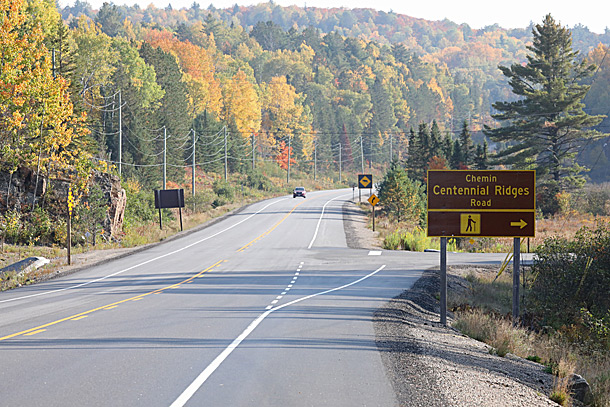 Increasing aspen fall colour along Highway 60 at km 38 in Algonquin Park on September 28, 2020