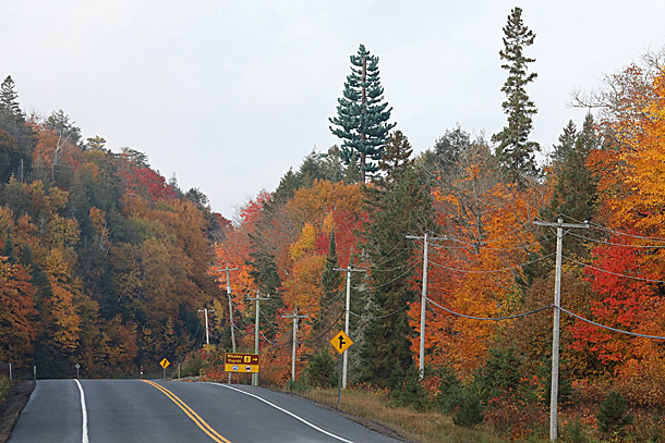 Highway 60 at km 7 in Algonquin Park on September 28, 2020. The tall tree in the middle of the image won't change colour. It is a cell tower.