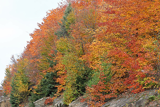 Fall colour near the West Gate in Algonquin Park on September 28, 2020