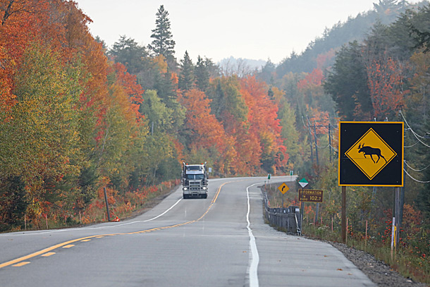 Near the west boundary of Algonquin Park along Highway 60 on September 28, 2020