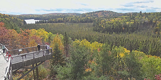 Image: Improving aspen fall colour as viewed via the Algonquin Park Webcam at the Algonquin Park Visitor Centre on September 30, 2020 (click to enlarge).
