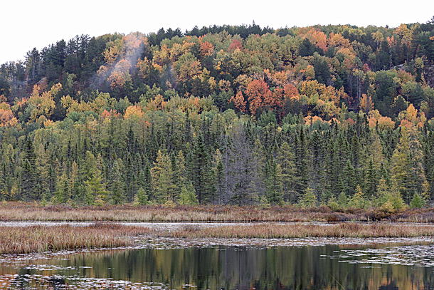 Costello Creek in Algonquin Park on October 2, 2020