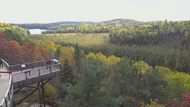 Fall colour as viewed via the Algonquin Park Webcam at the Algonquin Park Visitor Centre on October 5, 2020