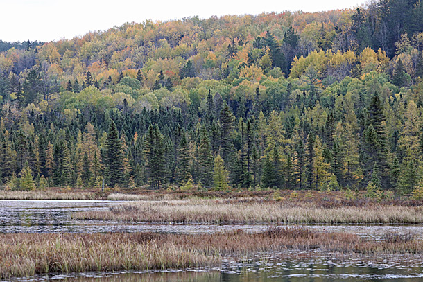 Along the Opeongo Road in Algonquin Park on October 6, 2020