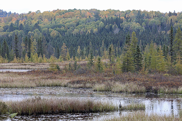 Costello Creek in Algonquin Park on October 6, 2020