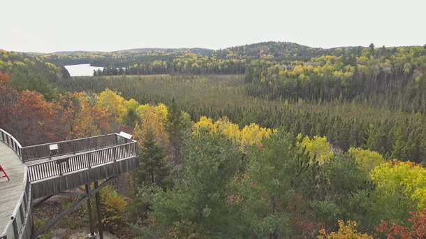 Fall colour as viewed via the Algonquin Park Webcam at the Algonquin Park Visitor Centre on October 9, 2020