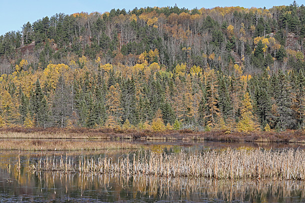 Costello Creek in Algonquin Park on October 13, 2020