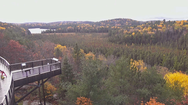 Fall colour as viewed via the Algonquin Park Webcam at the Algonquin Park Visitor Centre on October 16, 2020