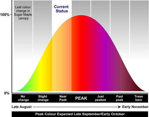 Current Algonquin Park Fall Colour Status