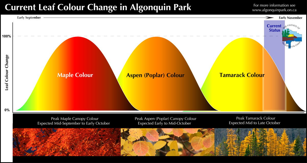 Current Fall Colour Leaf Change in Algonquin Park