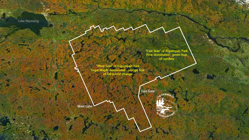 algonquin parks fall colour seen from space