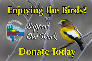 Support Bird Feeder Friday