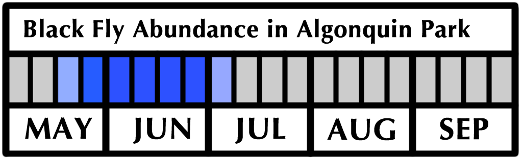 Black Fly Flight Period and Abundance in Algonquin Park