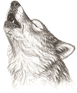 Public Wolf Howls Algonquin Provincial Park The Friends Of