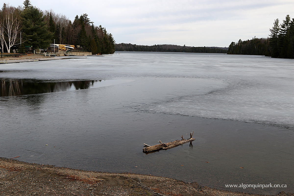 Canoe Lake in Algonquin Park on April 25, 2016