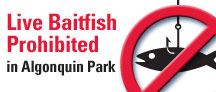 Live Baitfish Prohibited in Algonquin Park