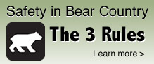 Safety in Black Bear Country