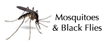 Mosquitoes and Black Flies Biting Insects