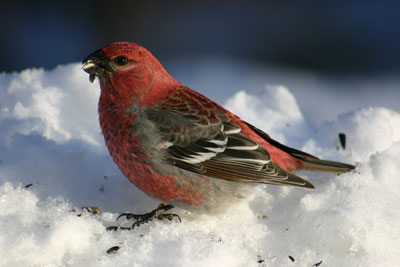 Ever wondered why birds are common in some winters and seem absent in