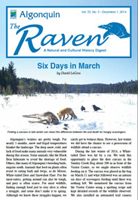 Raven - Six Days in March