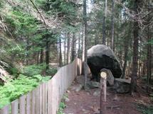Big Pines Trail | Algonquin Provincial Park | The Friends of ...