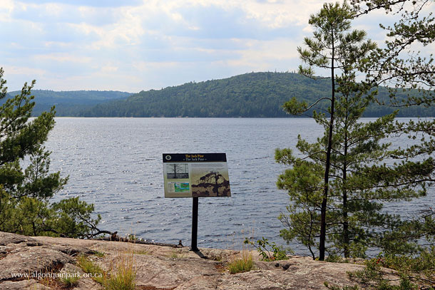 The Jack Pine Trail in Algonquin Park - The Location That Inspired Tom Thomson to Paint The Jack Pine