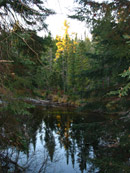 Whiskey Rapids Trail in Algonquin Park