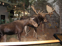 Algonquin Visitor Centre Algonquin Provincial Park The