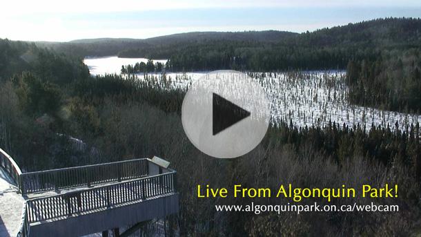 Algonquin Park Live Webcam   Algonquin Provincial Park   The