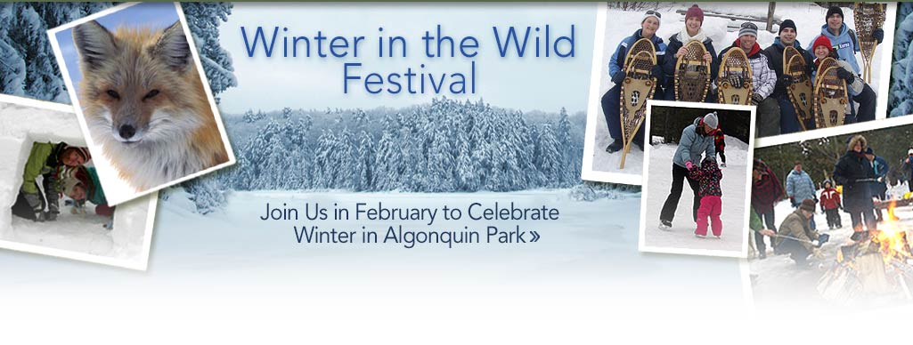 Winter in the Wild Festival 2015