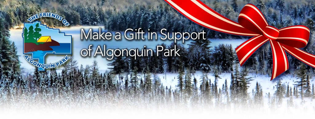 Make a Gift in Support of Algonquin Park